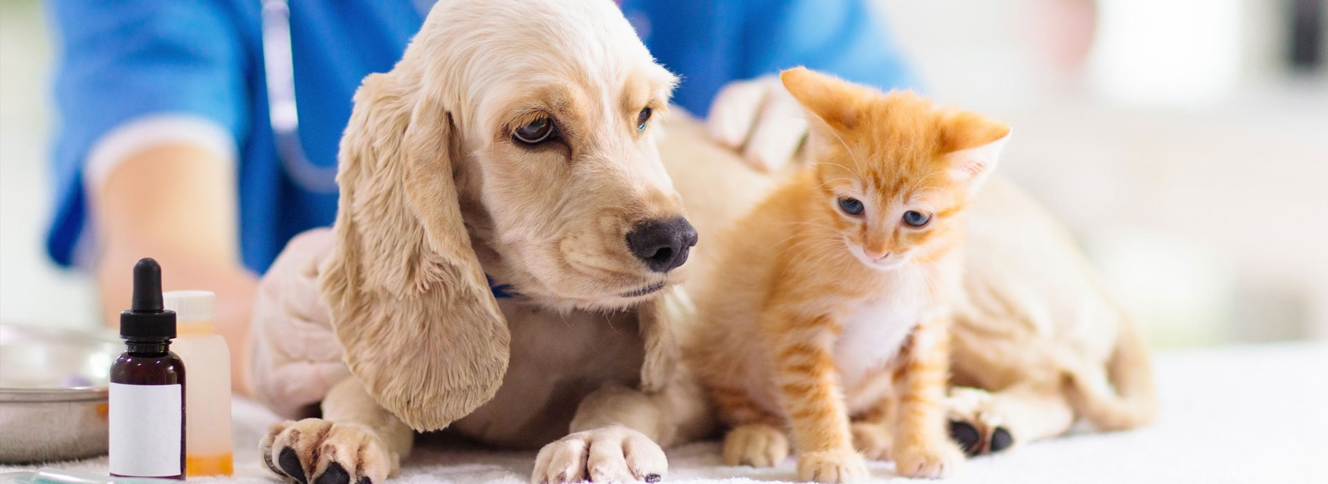 Decreasing interest in pet vaccines
